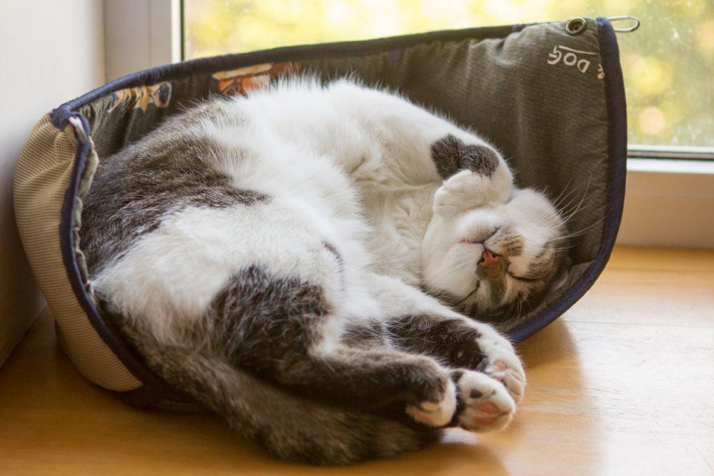 giornate di quarantena gatto