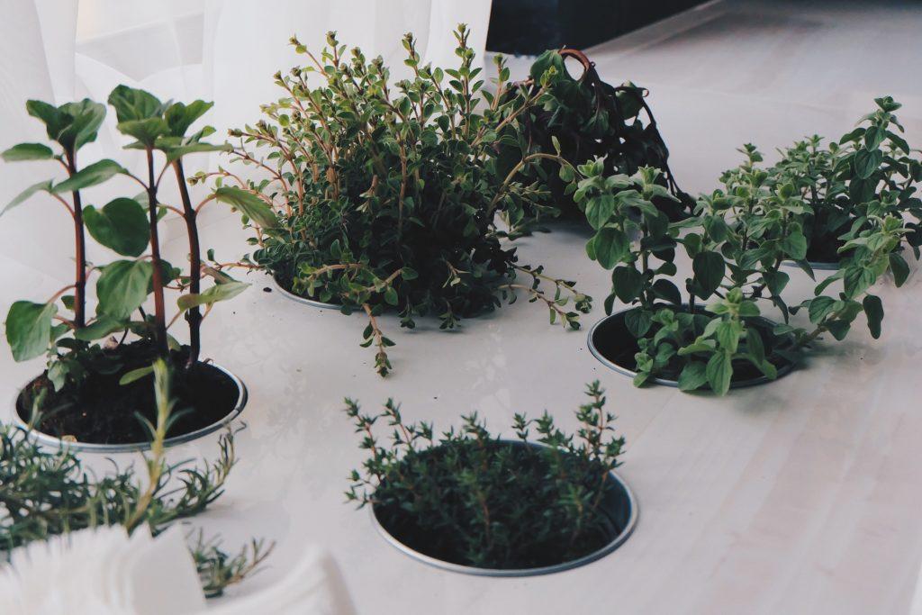 rinnovare casa erbe aromatiche